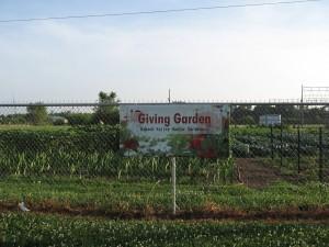 garden tour 2014 001